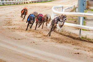 Dundalk Stadium Greyhounds Resized