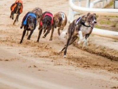 Dundalk Greyhound racing