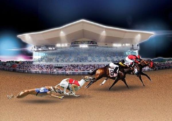 Horse/Greyhound racing Dundalk