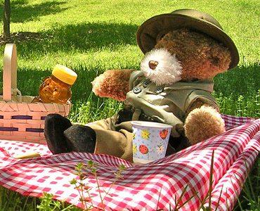 Teddy Bear's Picnic Saturday 10th February
