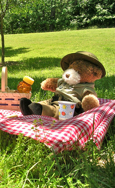Teddy Bear's Picnic Saturday 10th February