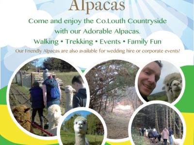 Long Acre Alpacas Ardee County Louth