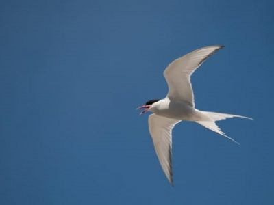 "Birdwatch Ireland Presents ""Terns of Ireland"" The Spirit Store Mon 3rd Sept"